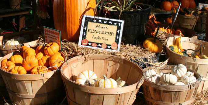2012 Welcome to Pumpking Patch_edited-1
