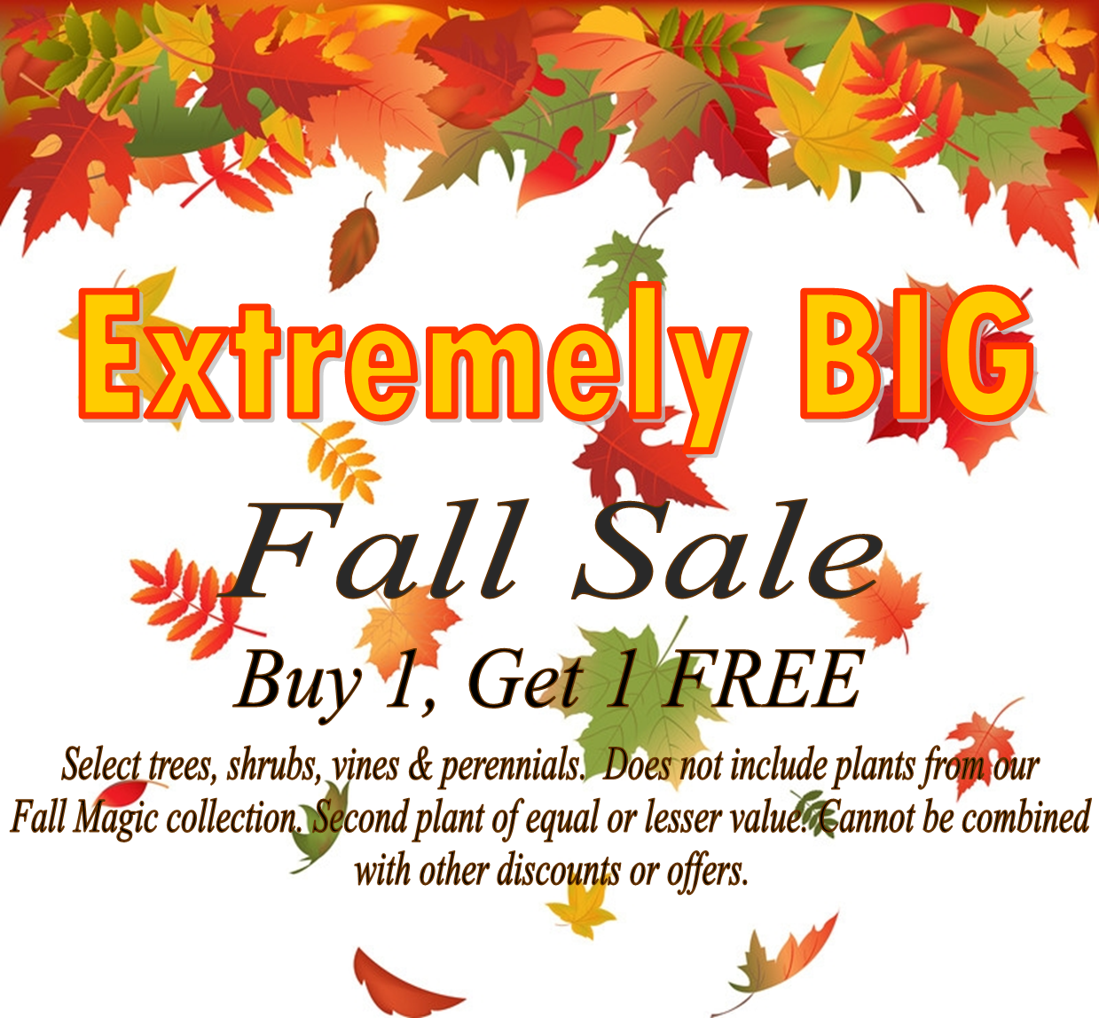 Extremely Big Fall Sale
