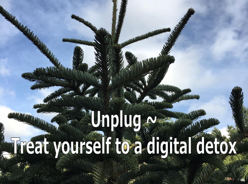 Noble Fir Unplug